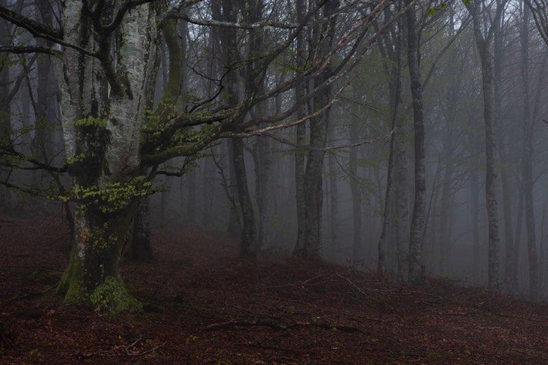 Niebla en Larrazpil