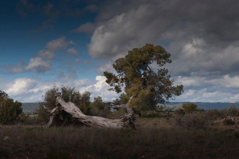 Del árbol caído