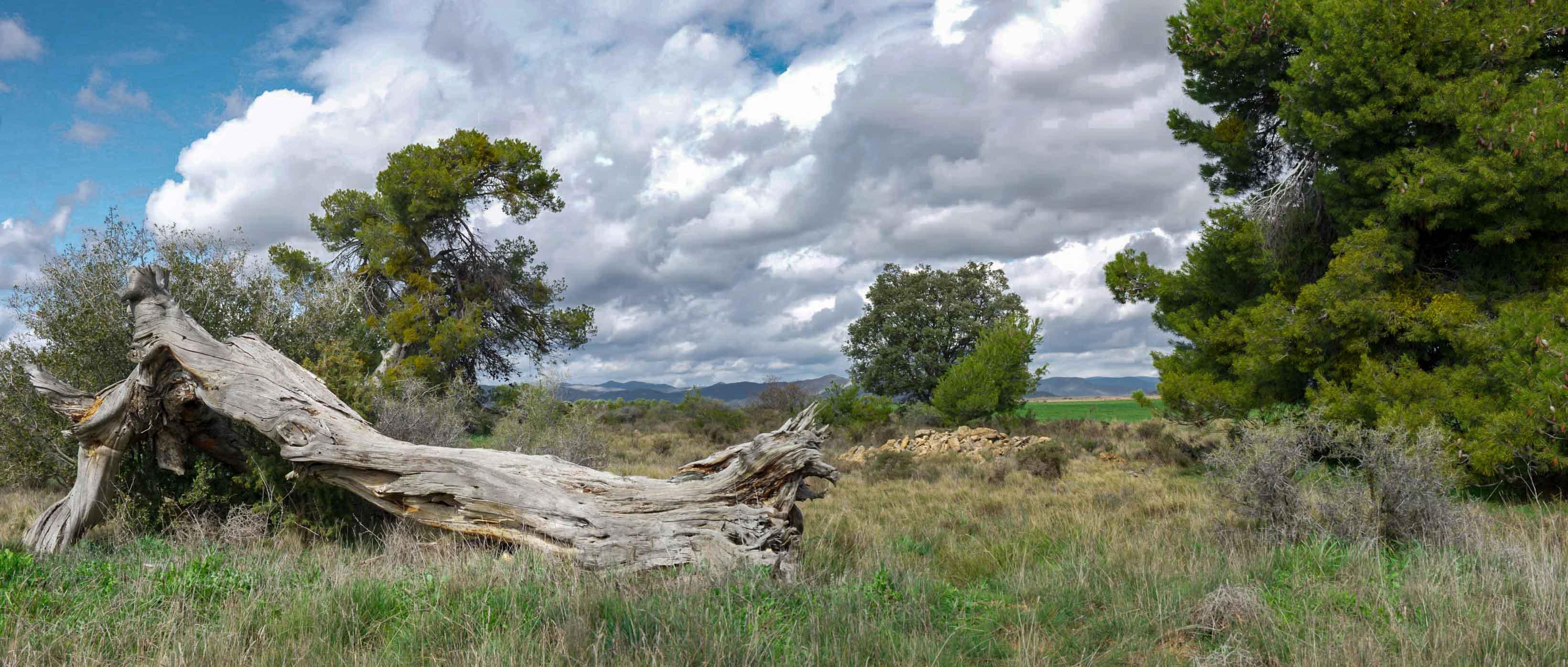 árbol caído, paisaje, nubes, campo