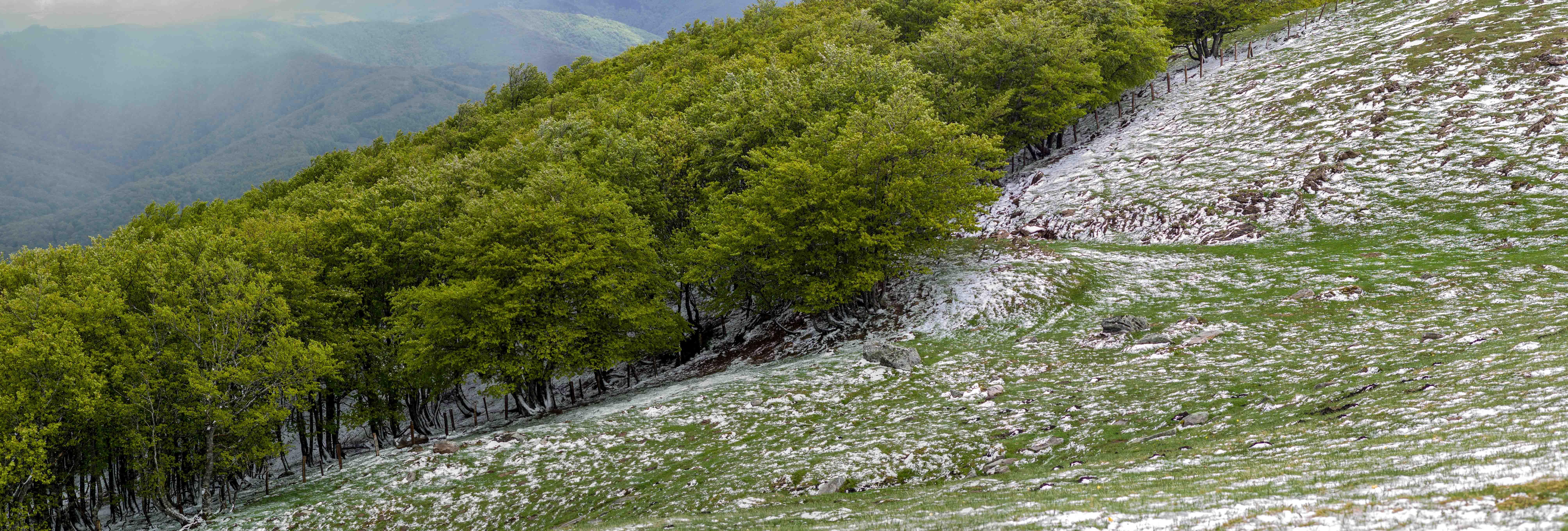 Monte, nieve, invierno