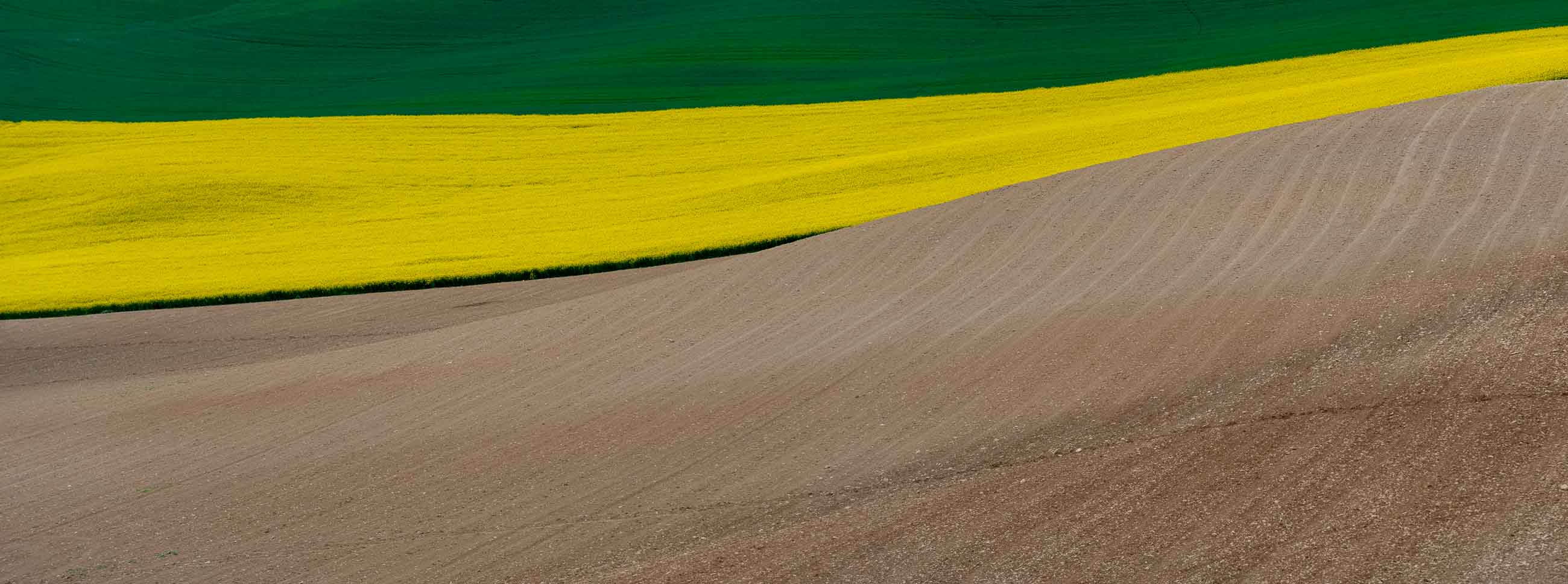 Campo de colza tricolor