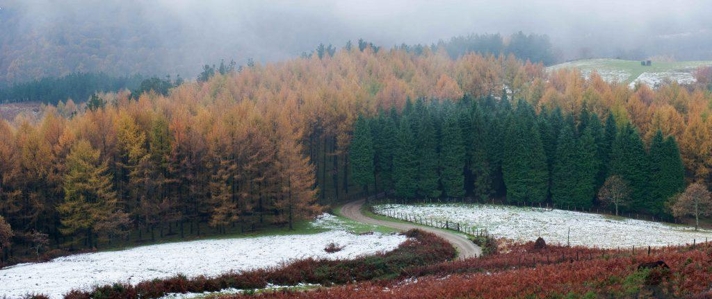 Pinar, Nieve