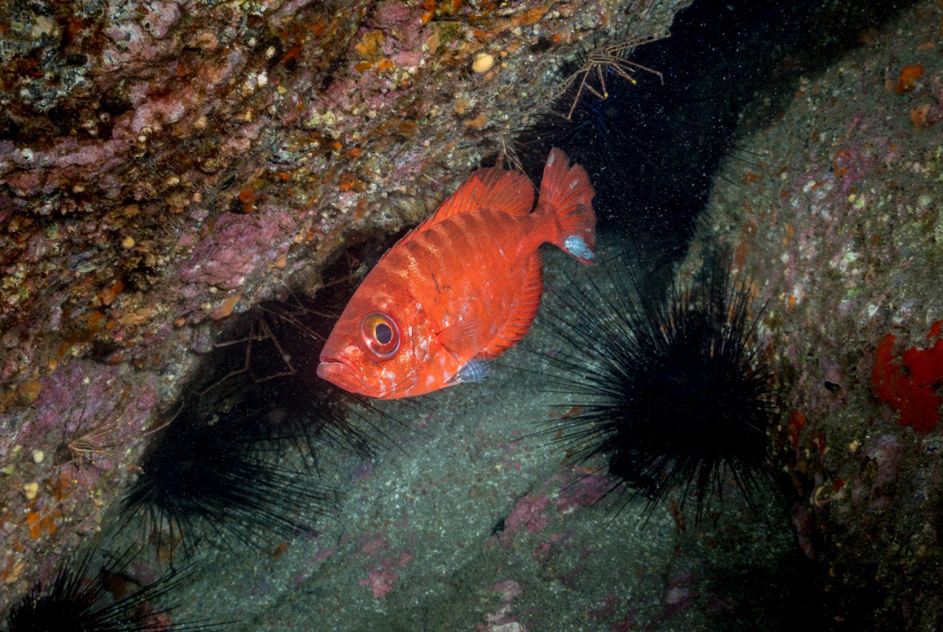 Las catalufas es una familia de peces marinos incluida en el orden Perciformes, distribuidos por zonas tropicales y subtropicales de los océanos Atlántico, Pacífico e Índico.